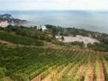 Russia to invest €250m in Crimean wine industry