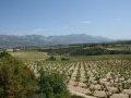 Spain: Rioja 2013 vintage declared 'good'