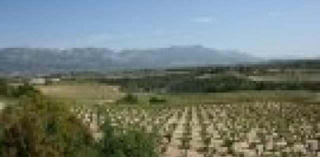 Spain: Rioja 2013 vintage declared 'good'
